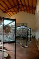 Il Museo  - Partanna (4004 clic)