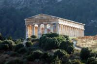 Il Tempio  - Segesta (1894 clic)
