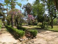Palermo - Villa Giulia un viale  carlo ireneo reina