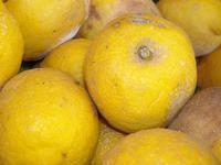 solo limoni   - Alcara li fusi (2159 clic)