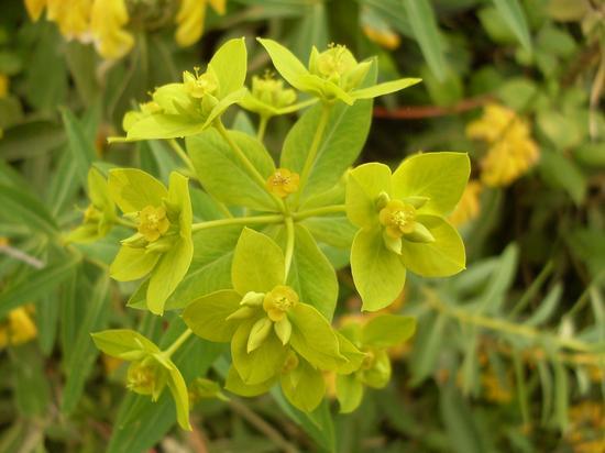 fiori - ENNA - inserita il 26-Aug-13