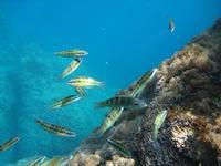 pesci su fondale marino  pesci multicolore  - Riserva dello zingaro (1638 clic)