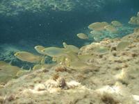 fondale marino   - Giardini naxos (2803 clic)