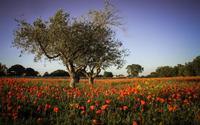 Rosso primavera,campagna modicana  MODICA Stefania Tirella
