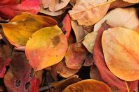 Natura siciliana. I colori dell'autunno.  MODICA Stefania Tirella