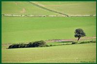 Carrubo solitario presso la Valle dell'Ippari  - Camarina (2430 clic)