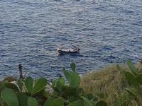 fichi d'india e pescatori,  un bel binomio   - Aspra (1204 clic)