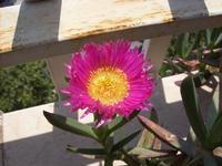 Un piccolo spontaneo capolavoro della natura..... da balcone  PALERMO MARCO GIUSEPPE DE GAETANO