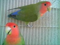 Pappa e Gallo erano dolcissimi....... :) PALERMO MARCO GIUSEPPE DE GAETANO