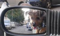 Billy allo specchio  PALERMO MARCO GIUSEPPE DE GAETANO