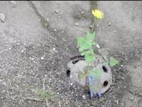 FOTO MORALE Anche da una fogna può nascere un fiore :P PALERMO MARCO GIUSEPPE DE GAETANO