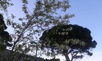 Le forme della primavera   - Mondello (1110 clic)