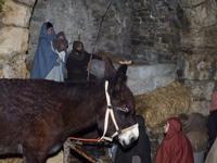 Presepe vivente Sacra Famiglia  - Termini imerese (676 clic)