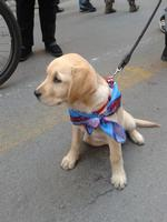 Un cucciolo assai simpatico  PALERMO MARCO GIUSEPPE DE GAETANO