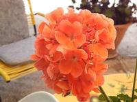 Un bel fiore   - Borgetto (946 clic)