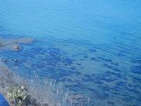 vista sul mare dal Belvedere - 26 agosto 2012  - Balestrate (428 clic)