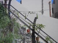 Cortile Carini - Laboratorio di Cocci per bambini - particolare - 6 settembre 2012  - Sciacca (418 clic)