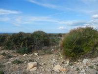Riserva Naturale Orientata Capo Rama - 15 aprile 2012  - Terrasini (704 clic)