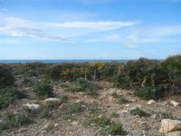 Riserva Naturale Orientata Capo Rama - 15 aprile 2012  - Terrasini (1123 clic)