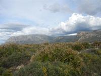 Riserva Naturale Orientata Capo Rama - 15 aprile 2012  - Terrasini (1512 clic)
