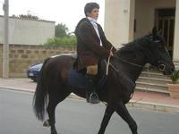SPERONE - sfilata di cavalli - festa San Giuseppe Lavoratore - 29 aprile 2012  - Custonaci (401 clic)