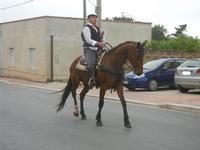 SPERONE - sfilata di cavalli - festa San Giuseppe Lavoratore - 29 aprile 2012  - Custonaci (426 clic)