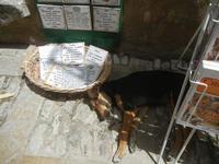 cane riposa tra i souvenir - 5 agosto 2012  - Erice (302 clic)