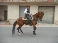 SPERONE - sfilata di cavalli - festa San Giuseppe Lavoratore - 29 aprile 2012  - Custonaci (412 clic)