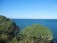 flora e mare panorama dalla periferia est della città - 11 gennaio 2012  - Castellammare del golfo (373 clic)