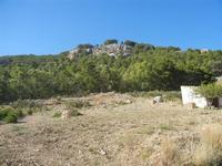 Monte Bonifato - al limite del bosco - 15 agosto 2012  - Alcamo (274 clic)