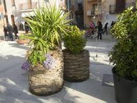 tronchi di palma - 22 aprile 2012  - Calatafimi segesta (621 clic)