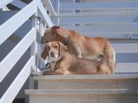 Aronn e Lacki - 10 settembre 2012  - Alcamo marina (304 clic)