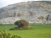 campi di grano e cava di pietra C/da DOMINGO - 4 marzo 2012  - Calatafimi segesta (996 clic)