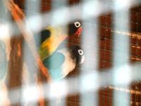 BIOPARCO di Sicilia - Zoo - 17 luglio 2012  - Villagrazia di carini (282 clic)