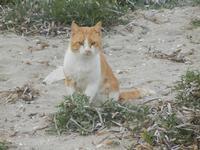 gatto - 29 gennaio 2012  - Nubia (580 clic)