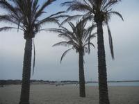 palme sulla spiaggia - 29 aprile 2012  - San vito lo capo (426 clic)