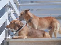 Aronn e Lacki - 10 settembre 2012  - Alcamo marina (1143 clic)