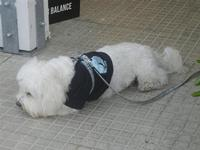 cagnolino - 29 aprile 2012  - San vito lo capo (365 clic)