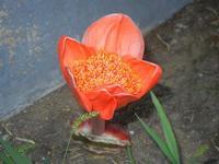fiore sbocciato - 18 settembre 2012  - Alcamo (322 clic)