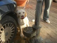 cane e fontanella 8 gennaio 2012  - Marinella di selinunte (838 clic)