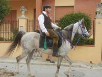 SPERONE - sfilata di cavalli - festa San Giuseppe Lavoratore - 29 aprile 2012  - Custonaci (1570 clic)