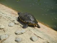 BIOPARCO di Sicilia - Zoo   - Villagrazia di carini (378 clic)