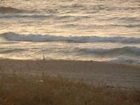 Zona Canalotto - spiaggia e mare al crepuscolo - 15 luglio 2012  - Alcamo marina (295 clic)