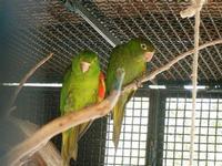 BIOPARCO di Sicilia - Zoo - 17 luglio 2012  - Villagrazia di carini (1095 clic)