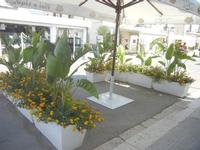 Via Savoia - 19 agosto 2012  - San vito lo capo (203 clic)