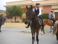 SPERONE - sfilata di cavalli - festa San Giuseppe Lavoratore - 29 aprile 2012  - Custonaci (491 clic)