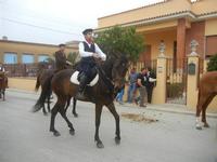 SPERONE - sfilata di cavalli - festa San Giuseppe Lavoratore - 29 aprile 2012  - Custonaci (516 clic)