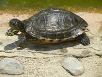 BIOPARCO di Sicilia - Zoo - 17 luglio 2012  - Villagrazia di carini (378 clic)
