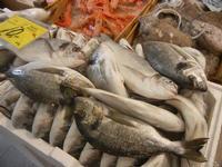 pescheria - orate e pesci vari - 16 luglio 2012  - Trapani (585 clic)