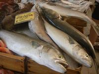 pescheria - ricciola e sarago - 16 luglio 2012  - Trapani (676 clic)
